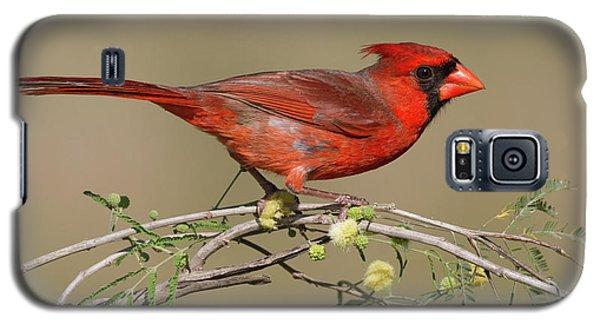 South Texas Cardinal Galaxy S5 Case