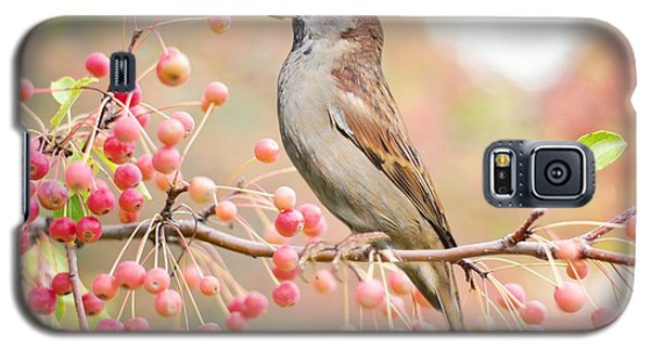 Sparrow Eating Berries Galaxy S5 Case