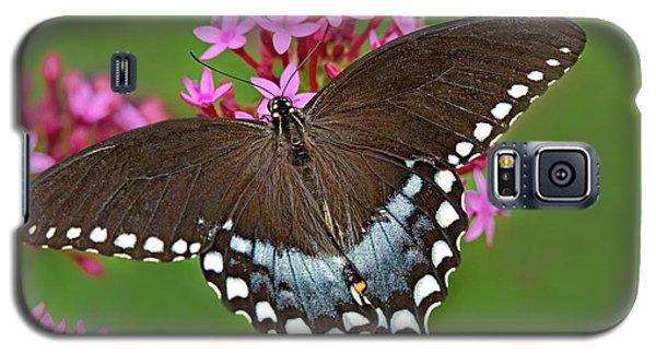 Spicebush Swallowtail Papilio Trollus Galaxy S5 Case