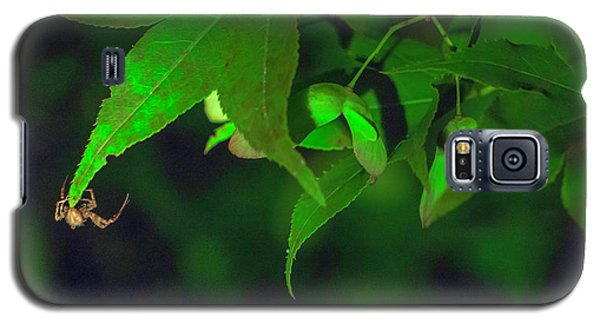 Spider At Night On A Leaf Galaxy S5 Case