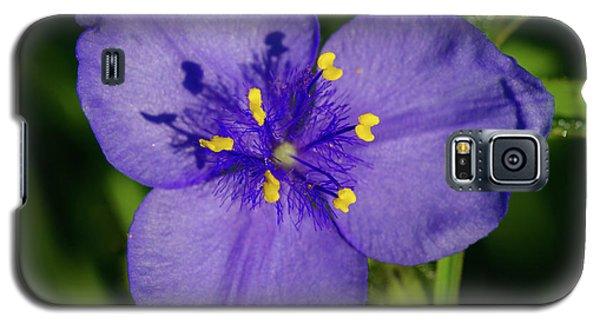 Spiderwort Flower Galaxy S5 Case
