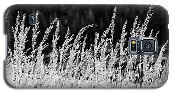 Spikes Galaxy S5 Case