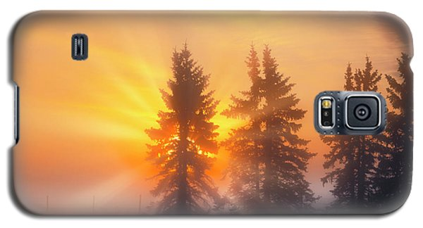 Spruce Trees In The Morning Galaxy S5 Case