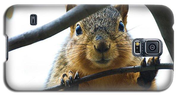 Spying Fox Squirrel Galaxy S5 Case