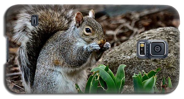 Squirrel And His Dinner Galaxy S5 Case