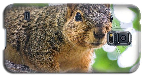 Squirrel Close Up Galaxy S5 Case