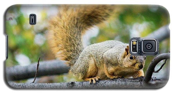 Squirrel Crouching On Tree Limb Galaxy S5 Case