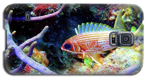 Squirrel Fish Galaxy S5 Case