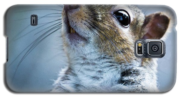Squirrel With Nose In The Air Galaxy S5 Case