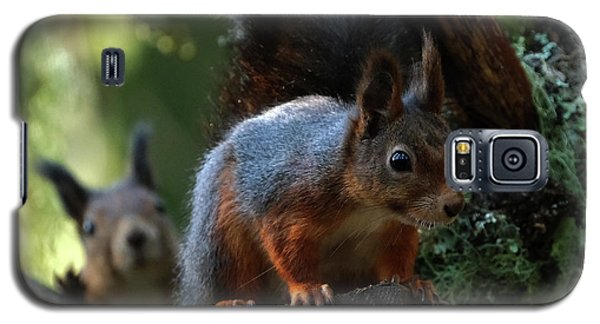 Squirrels Galaxy S5 Case