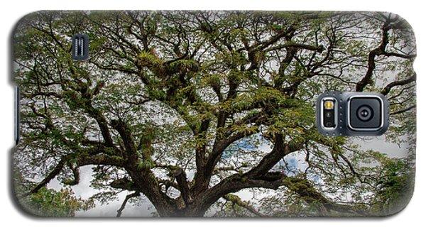 St. Kitts Saman Tree Galaxy S5 Case