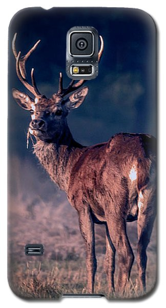 Stag Eating Galaxy S5 Case