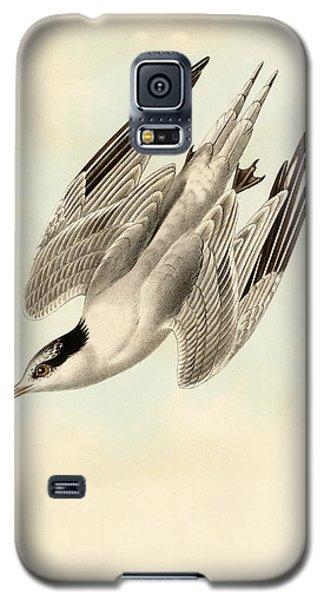 Sterna Elegans Galaxy S5 Case