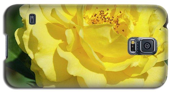 Striking In Yellow Galaxy S5 Case