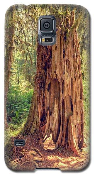 Stump In The Rainforest Galaxy S5 Case