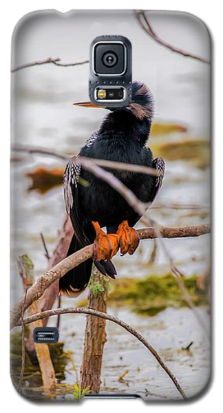 Stunning Anhinga Galaxy S5 Case