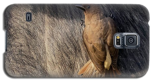 Sub-adult Yellow-billed Oxpecker On Cape Buffalo Galaxy S5 Case