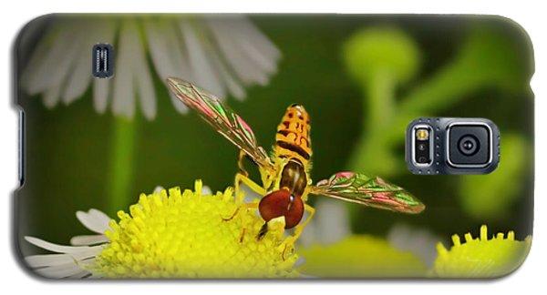 Sugar Bee Wings Galaxy S5 Case