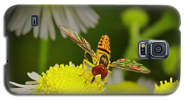 Sugar Bee Wings Galaxy S5 Case