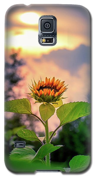 Sunflower Opening To The Light Galaxy S5 Case
