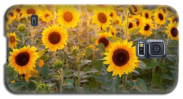 Sunflowers Field Galaxy S5 Case