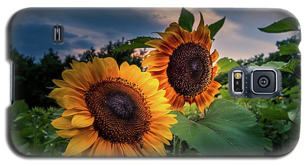Sunflowers In Evening Galaxy S5 Case