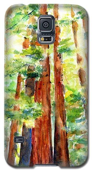 Sunlight Through Redwood Trees Galaxy S5 Case