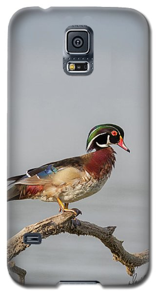 Sunny Day Wood Duck Galaxy S5 Case