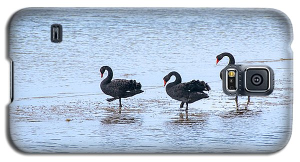 Swans On Parade Galaxy S5 Case