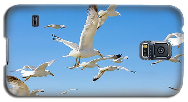 School Galaxy S5 Case - Swarm Of Sea Gulls Flying Close To The by Smoxx