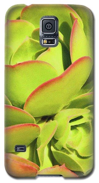 Sweet Succulents I Galaxy S5 Case