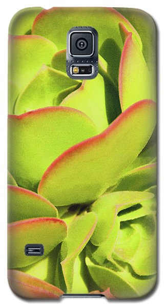 Sweet Succulents I Galaxy S5 Case