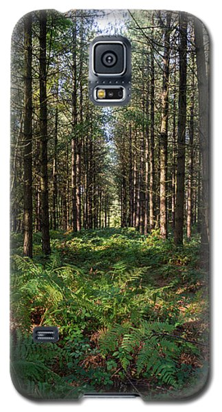 Tall Trees In Sherwood Forest Galaxy S5 Case