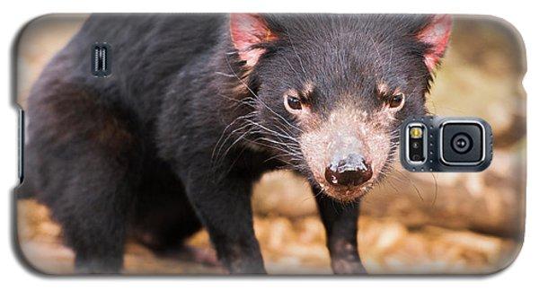Tasmanian Devil In Hobart, Tasmania Galaxy S5 Case