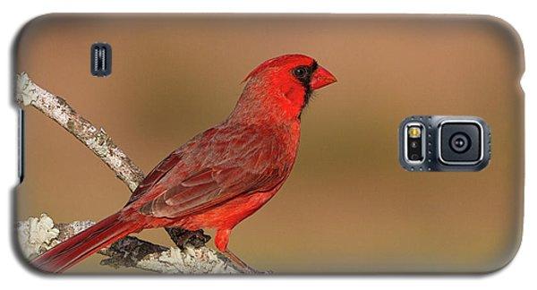 Texas Cardinal Galaxy S5 Case