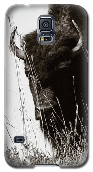 The Bison Roaming The Grasslands In Custer State Park South Dakota United States Of America Galaxy S5 Case