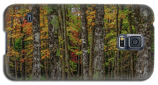The Fall Woods Galaxy S5 Case