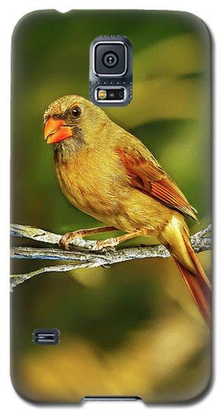 The Female Cardinal Galaxy S5 Case