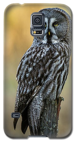 The Great Gray Owl In The Morning Galaxy S5 Case