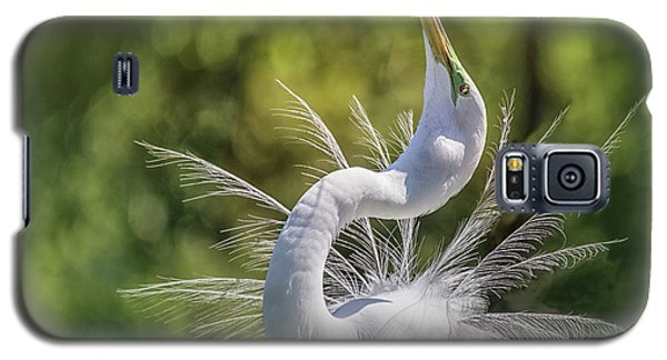 The Great White Egret Mating Dance Galaxy S5 Case