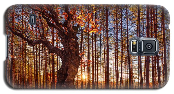 The King Of The Trees Galaxy S5 Case