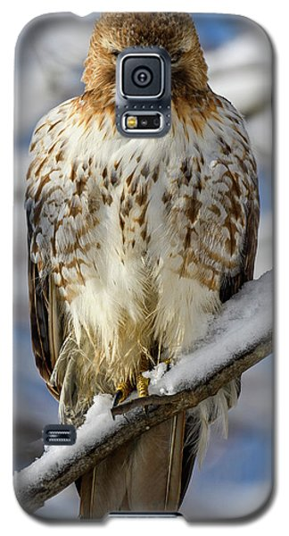The Look, Red Tailed Hawk 1 Galaxy S5 Case