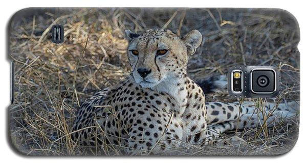 Cheetah In Repose Galaxy S5 Case