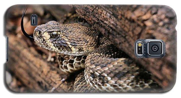 The Western Diamondback Rattlesnake Galaxy S5 Case