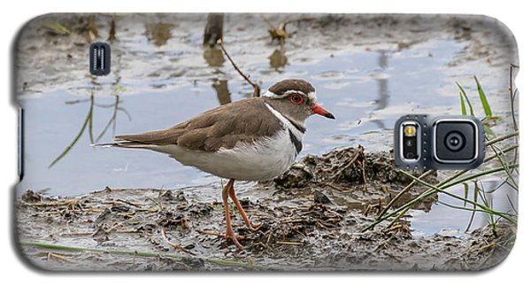 Three-banded Plover Galaxy S5 Case