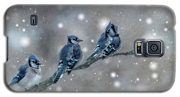 Three Blue Jays In The Snow Galaxy S5 Case