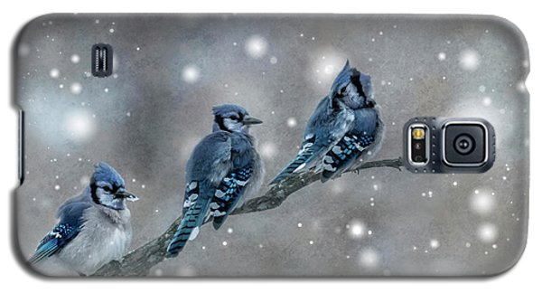 Three Blue Jays In The Snow Galaxy S5 Case