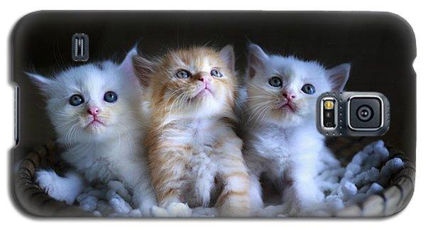 Three Little Kitties Galaxy S5 Case