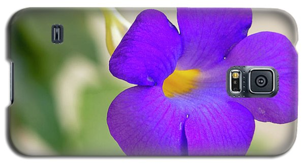 Thunbergia Erecta Bush Clock Vine Galaxy S5 Case