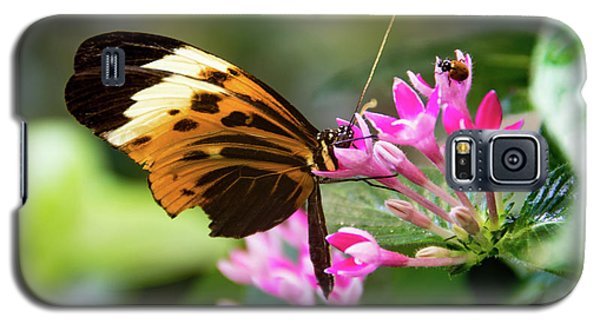 Tiger Longwing Butterfly Drinking Nectar  Galaxy S5 Case